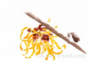 NATURAL BEAUTY BOOK -Witch hazel