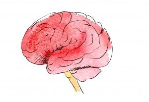 MEDICAL POSTER - Brain