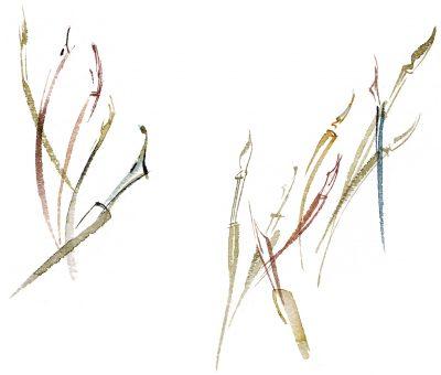 SWATCH reeds comp