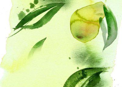 SAINSBURYS - Green Fruit Tea