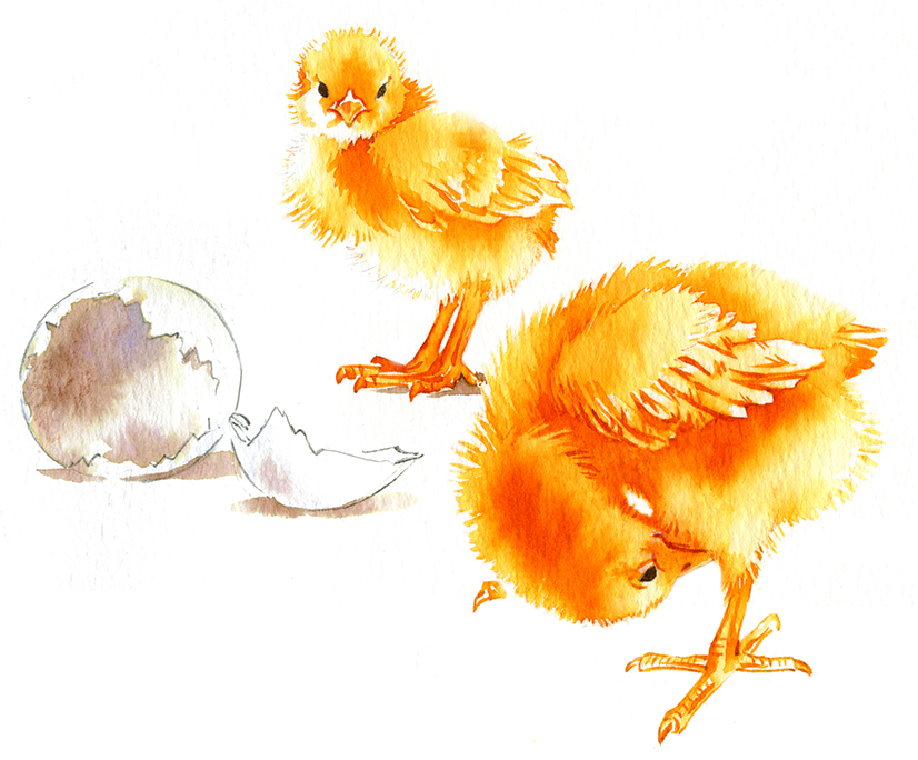 Illustration Wildlife Fabdesigns Chick Giftcard Easter Hatching