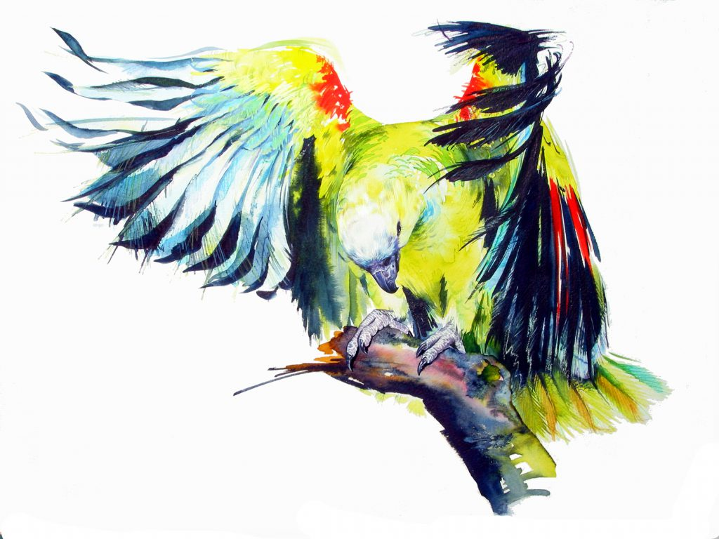 Illustration Wildlife Amazon Parrot Private Commision Watercolour Ink