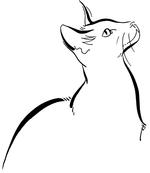 Illustration Wildlife Cat Siamese Line Logo Mono Linear