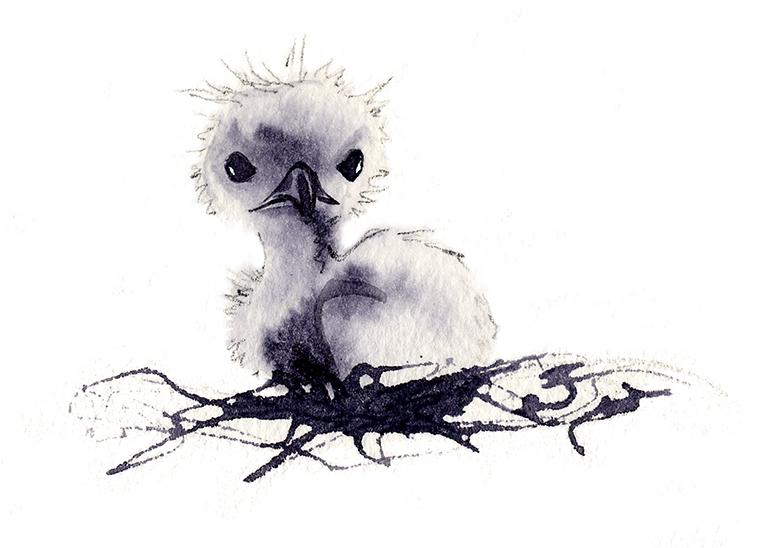 Illustration Wildlife Fab Design Character Design Fledgling Baby Bird.mono