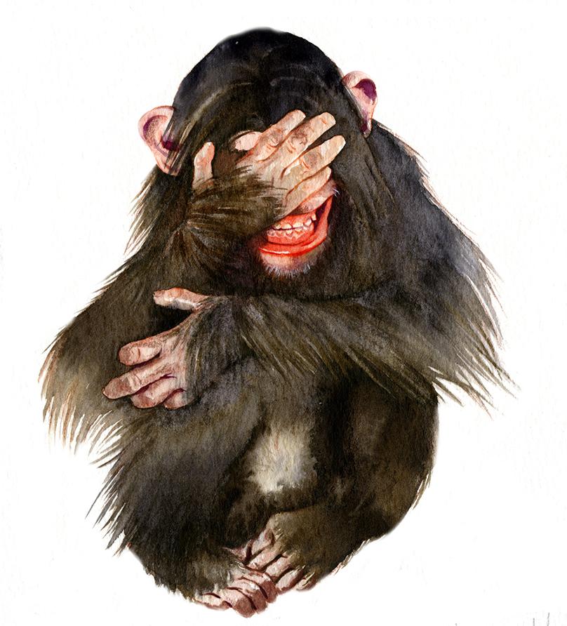 Illustration Wildlife Fab Designs Chimpanzee Chimp Smile Watercolour Giftcard