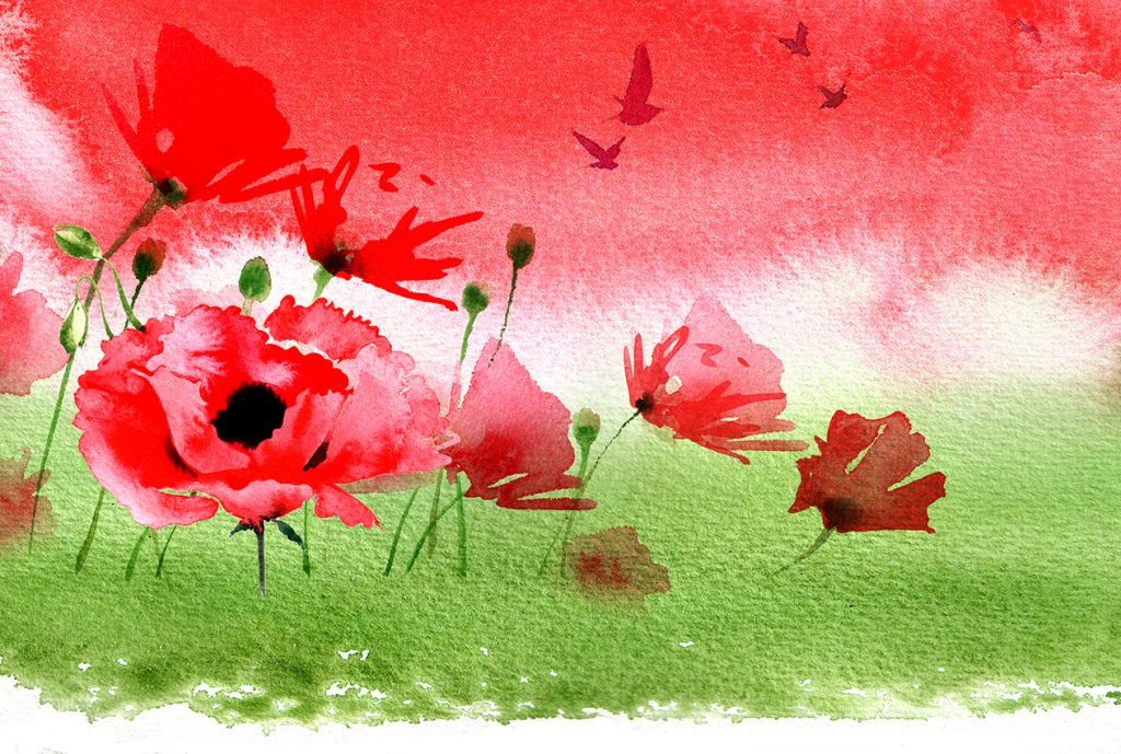 Illustration Flora Jersey Postage Stamps Collectables Remembrance Day Flanders Fields Poppy Watercolour
