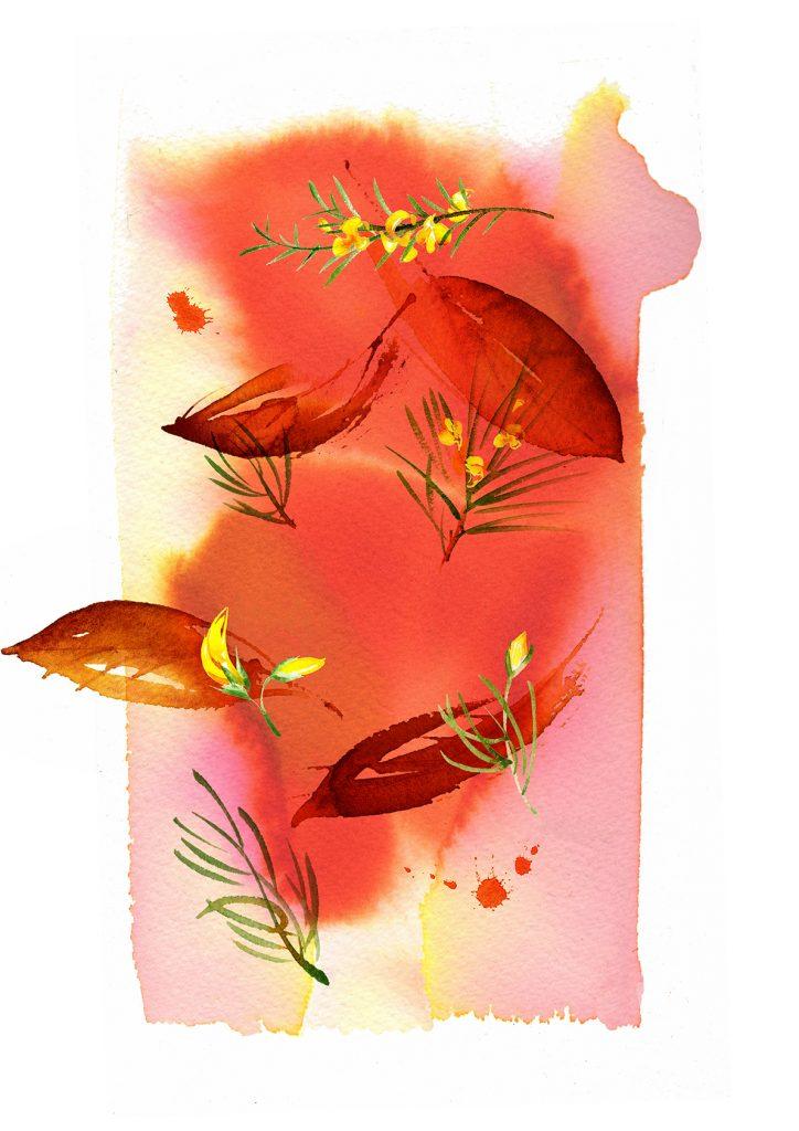Illustration Flora Sainsburys Rooibos Tea Packaging Watercolour