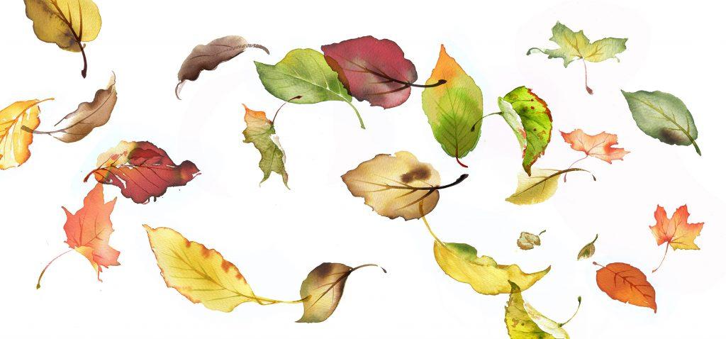 Illustration Flora Autumn Leaves Falling Catalogue