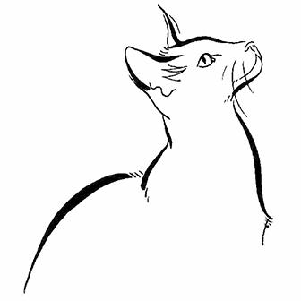 Illustration Line Cat Icon Burmese Morning Animals Brush And Ink