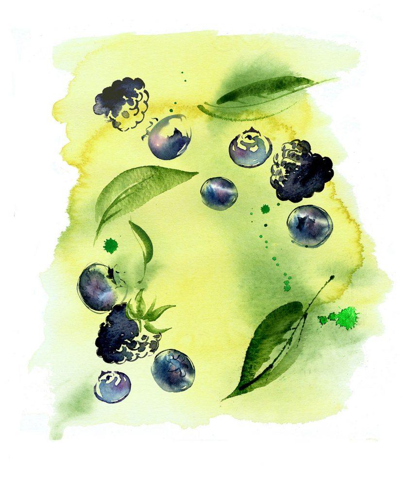 Illustration Food Drink Sainsburys Supermarket Berry Green Tea Packaging
