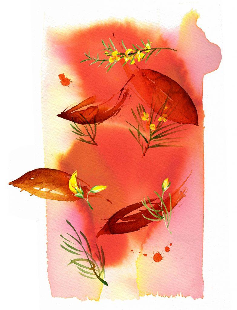 Illustration Food Drink Sainsburys Supermarket Roobois Tea Packaging Own Brand