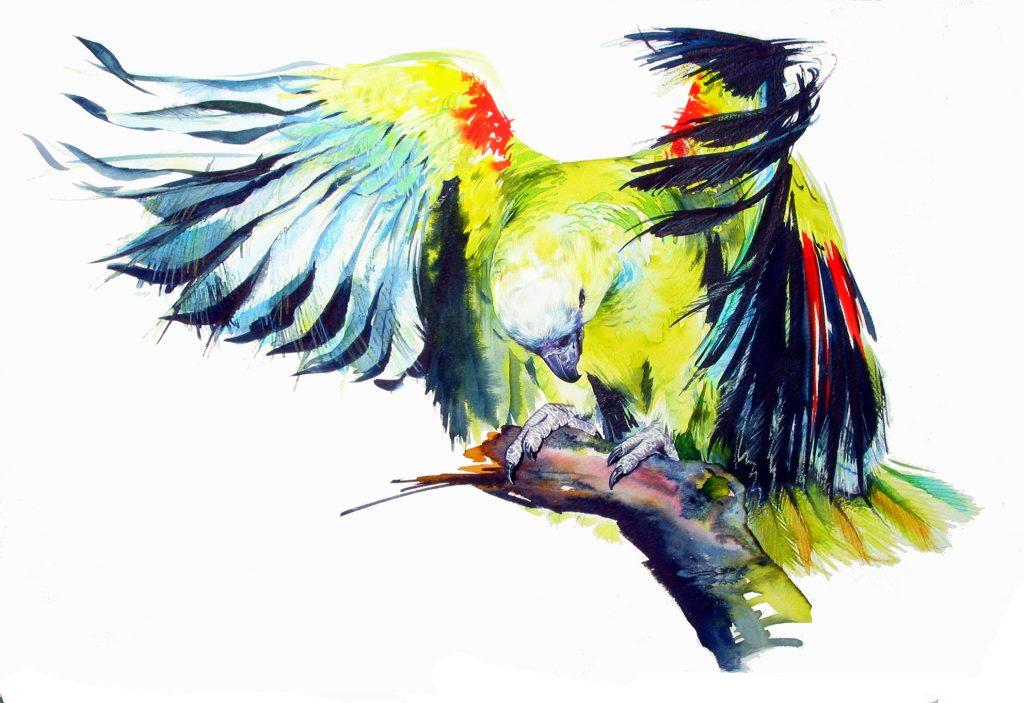 Shop Artwork Amazonian Parrot Watercolour